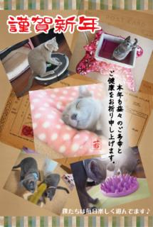 キャッテリー_年賀状2015.png